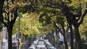 Исследование: Засаживайте улицы деревьями, чтобы предотвратить серьёзные приступы астмы