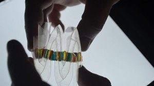 Электрический угорь подсказал ученым, как создать новый источник питания