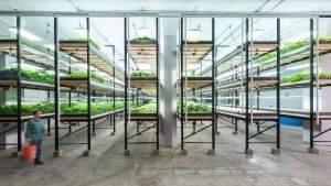 Будущее за городскими агрохозяйствами