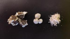 Необычные семена, которые могут обеспечить чистой водой миллионы людей