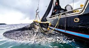 Рыболовство в открытом океане играет ограниченную роль в обеспечении питанием населения планеты