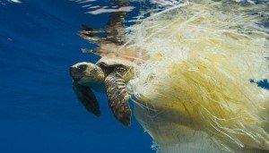 «Призрачная рыбалка» ежегодно убивает 650 тысяч морских животных