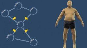 Ученые определили, какой ген отвечает за появление лишнего веса
