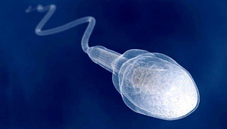 Сперма бесплодных мужчин оказалась здоровой до момента выхода из тела