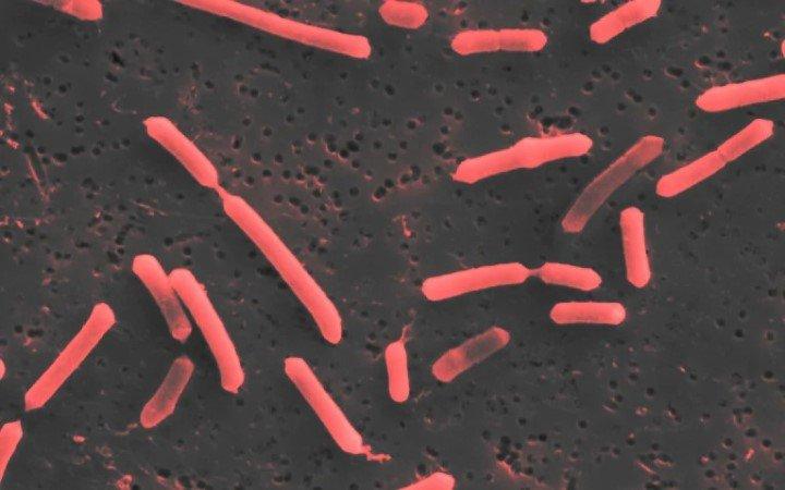 Высушенные в замороженном виде кишечные бактерии могут стать ключом к борьбе с болезнями