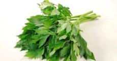 Японское растение, употребляемое в пищу самураями, может стать ключом к замедлению старения