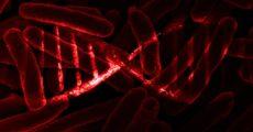 Ученые научились хранить данные внутри ДНК живых бактерий